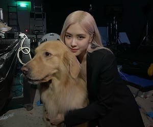 dogs, kpop, and blackpink image