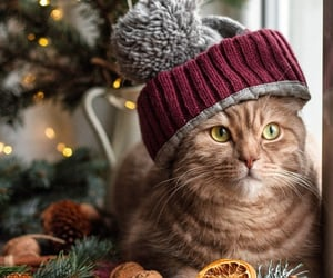 cat, kitty, and christmas image