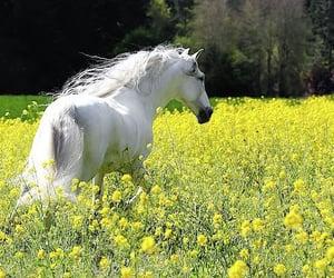 animal, beautiful, and beauty image