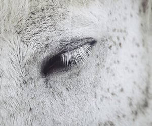 horse, freckles, and white image