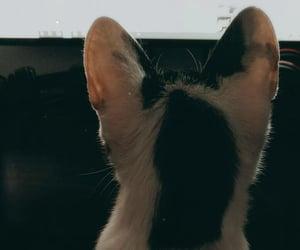 cat, amor, and Gata image