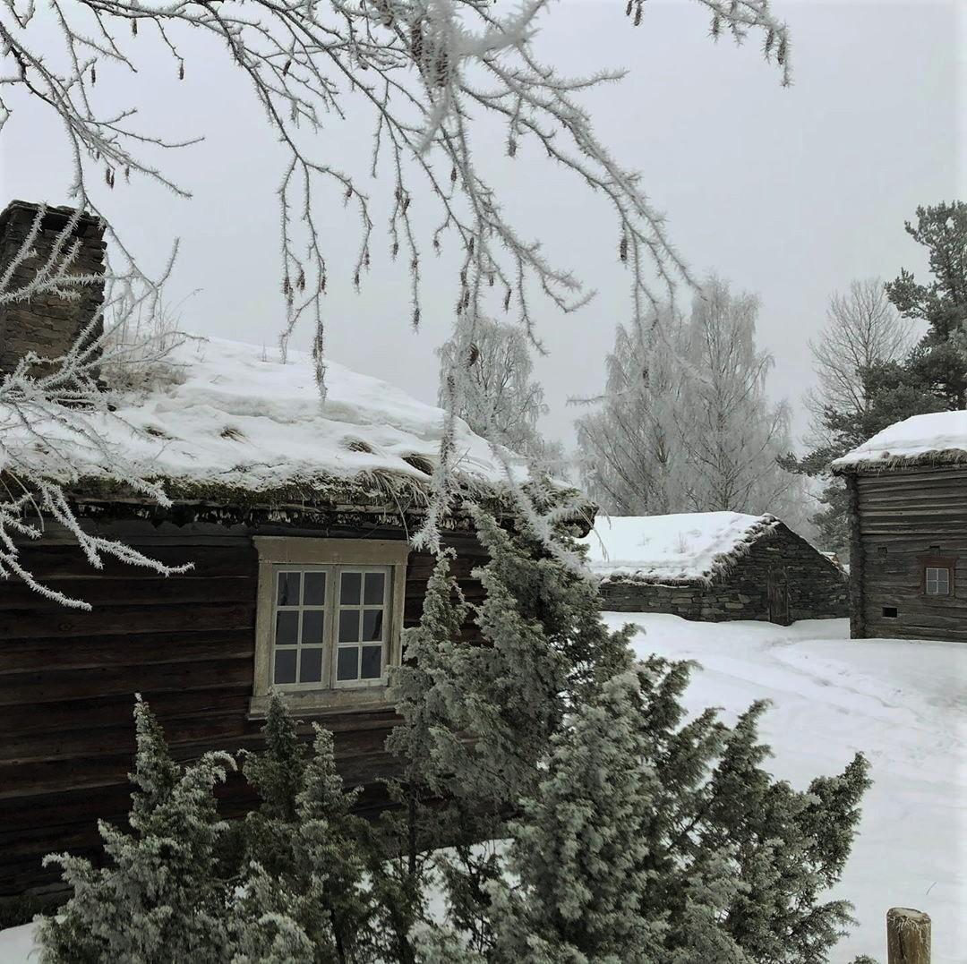 christmas, christmas tree, and forest image