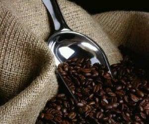 coffee beans, sweet treats, and iconic coffee & chicory image