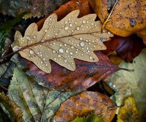 Autumn colours in the rain