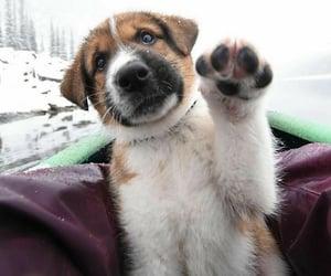 Animales, ternura, and mascota image