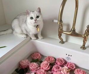 flowers, animal, and fashion image
