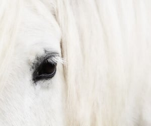 horse, animal, and white image