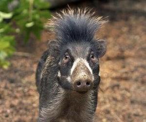 Animales, naturaleza, and pig image
