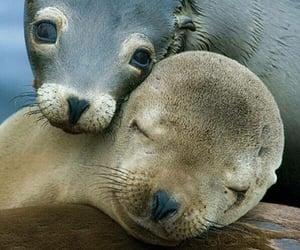 animal and seal image