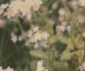 aesthetic, flowers, and plant image