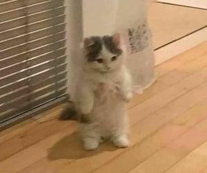 animals, cat, and cat pfp image