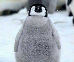 Animales, ternura, and pingüino image