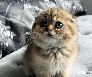 cat cats, pet pets, and kitten kittens image