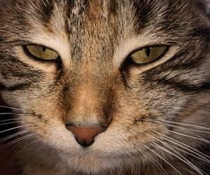 animal, chaton, and coeur image