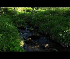 nature sound, nature sounds, and water flowing image