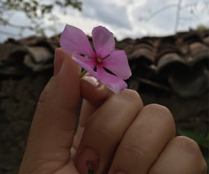 autoral, nails, and flowers image