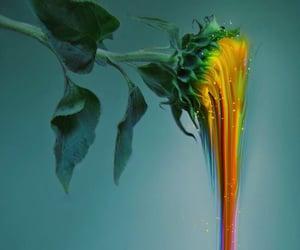 art, flower, and grunge image