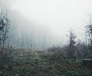fall, fog, and forest image