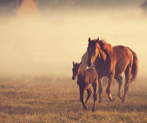 horse, free, and animal image