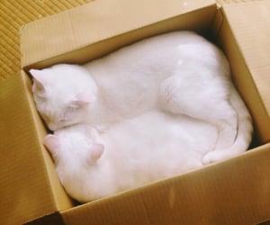 animals, feline, and box image