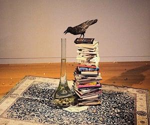 crow, bird, and museum image