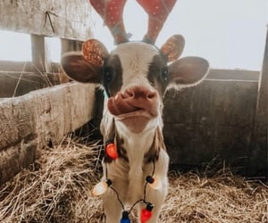 antlers, baby, and christmas image