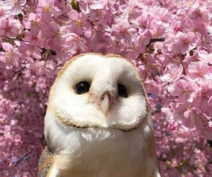 owl, animal, and flowers image