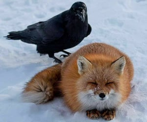 """.•°*°•.💙.•°*°•.💙.•°*°•.💙.•°*°•.  """"""""Keeping a smile can overcome inner fear.""""🦊🐦 credit: James Williams"""" (by @foxofinsta 