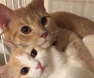 cat, cute, and love image