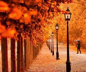 Gilded Autumn Velvet