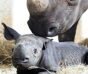 animals, Rhinos, and wildlife image