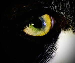 animals, close up, and eye image