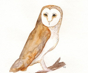 beige, natural, and owl image