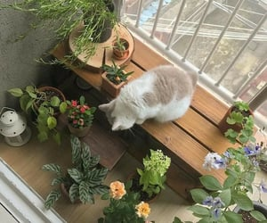 cat, plants, and aesthetic image