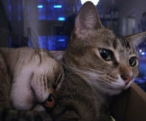 animal, cat, and pets image