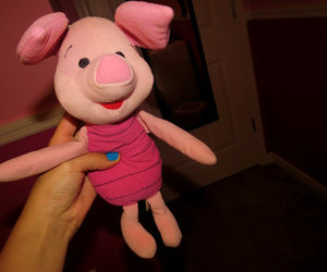 photography, piglet, and cute image