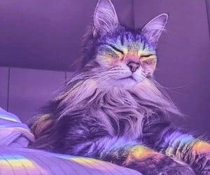 cat, purple, and rainbow image
