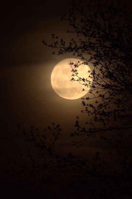 article, dark, and fall image
