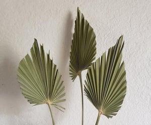 art, plantas, and verde image