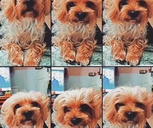 dog, socute, and fofinha image