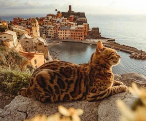 cat, travel, and animal image