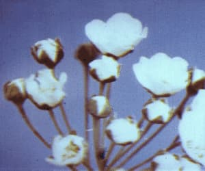aesthetic, flowers, and old film image