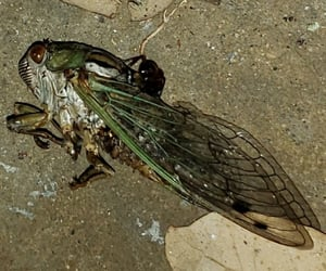 aesthetic, Cicada, and grunge image