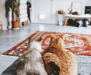 cat, cute cat, and cat ass image