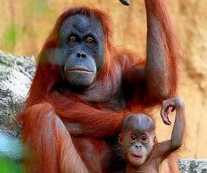 Animales, naturaleza, and simio image