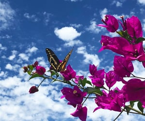 cloud, flower, and nature image