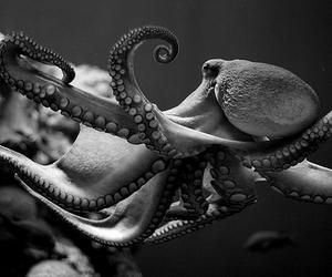 octopus, sea, and ocean image