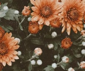 flowers, retro, and vintage image
