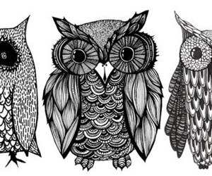 owl, drawing, and black and white image