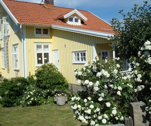 house and yellow image